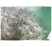 Silver Mint Dandelion Poster