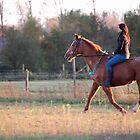 Sunset Ride by Febev