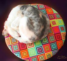 Kiki Naps by Ginny Schmidt