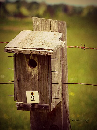 Bird house #3 by Heather Crough