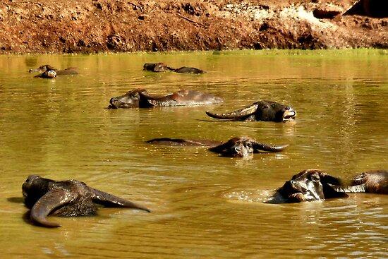 Wallowing Water Buffalo by missmoneypenny