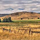 Vast brown land ,  Chakola NSW by Kym Bradley