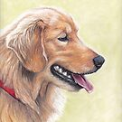 Golden Retriever by Charlotte Yealey