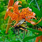 Tiger Swallowtail Butterfly and Turk's Cap Lily Wildflower by MotherNature