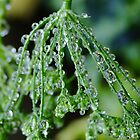 Rain Drops on Celery Seeds by Gabrielle  Lees