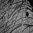 The Bird in the Branches by timothyedward