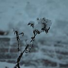Snow-covered Branch by Willmoxdog