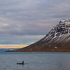 Lone Orca  by Pippa Carvell