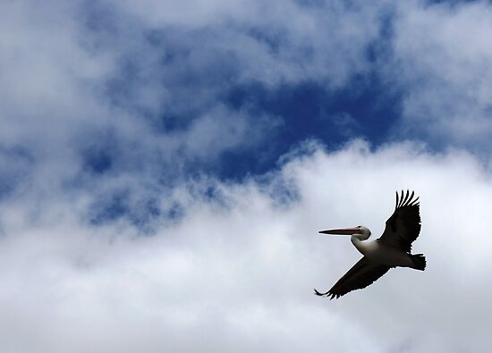 No bird soars too high, if he soars with his own wings by Michael Humphrys