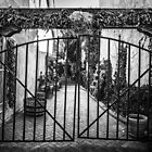 Gate with Red Peppers NM - B&W by GJKImages