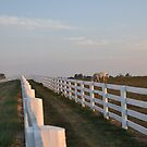 Double Fence II by John Carey