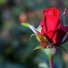 Closed Red Bokeh by hhndoll