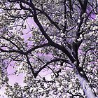 Silver Magnolias by MSRowe Art and Design