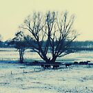 Winter © by JUSTART