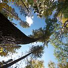Big Pines Algonquin Park, Northern Ontario by creativegenious