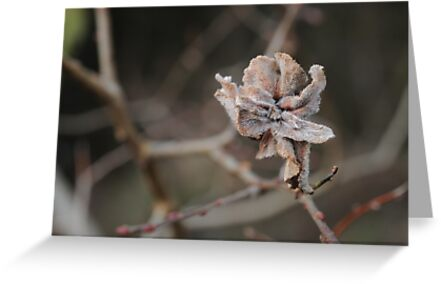 Willow Cabbage Gall, Landscape by cuilcreations
