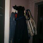 Feline cloakroom attendant by brucemlong