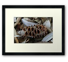 Bush Call Framed Print