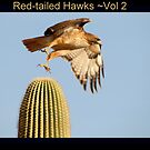 Red-tailed Hawks II by Kimberly P-Chadwick