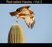 Red-tailed Hawks II by Kimberly Chadwick