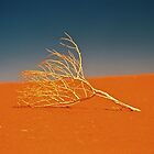 Lifeless Branch by AndyFeltonPix