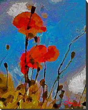 The Lovely Poppies by DiNovici