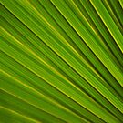 Leaf Abstract by Natalie Broome