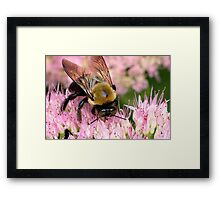 Stone Mountain Bumble Bee Framed Print