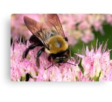 Stone Mountain Bumble Bee Canvas Print