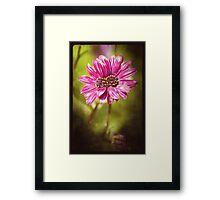 Mutant Osteospermum / Dimorphotheca v.2 Framed Print