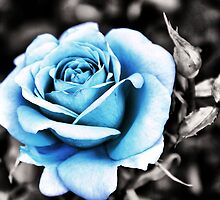 Blue Rose by Maria Tzamtzi