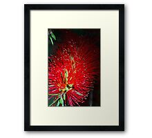 Bottle Brush Glow Framed Print