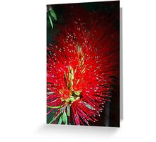 Bottle Brush Glow Greeting Card