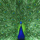 Lime Peacock by Teenieweenie