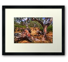 Dry Watercourse. Framed Print