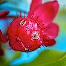 A very unusual flower! by Renee Hubbard Fine Art Photography