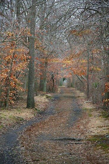 Old Train Path by Eileen McVey