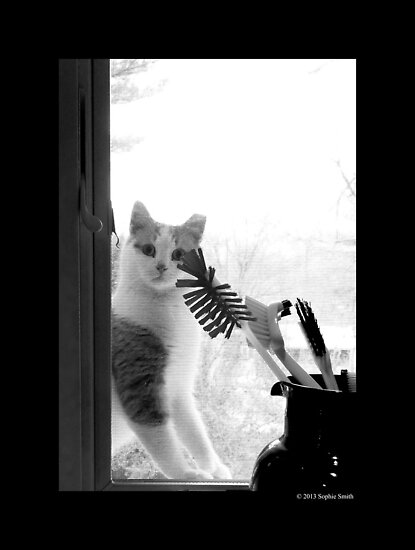 Felis Catus - Domestic Stray Cat In The Kitchen Window by © Sophie W. Smith