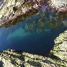 Pool Heaven... by debsphotos