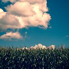 Vermont Cornfield by Edward Fielding