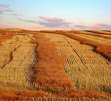 Swathed Field by Larry Trupp