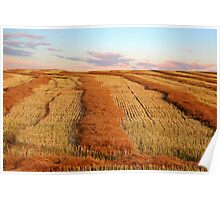 Swathed Field Poster