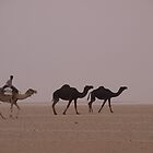 Camel in the desert of Saudi Arabia by Kirk D. Belmont Photography