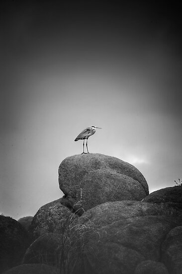 Contemplation by Bob Larson