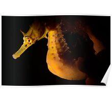 Golden Pot Poster