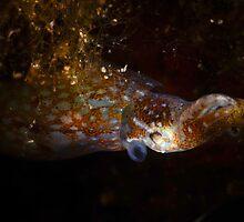Pygmy Squid by MattTworkowski