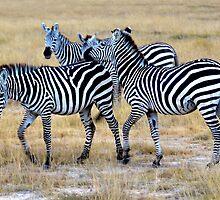 Zebras by Pravine Chester
