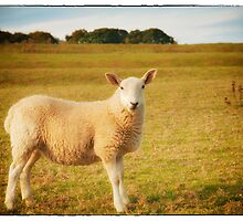 Smiling Sheep in Field by Natalie Kinnear