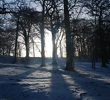 Trees at Tatton by DMHotchin