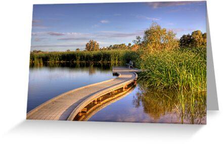 Swanport Wetlands - Swanport, Murray Bridge, South Australia by Mark Richards